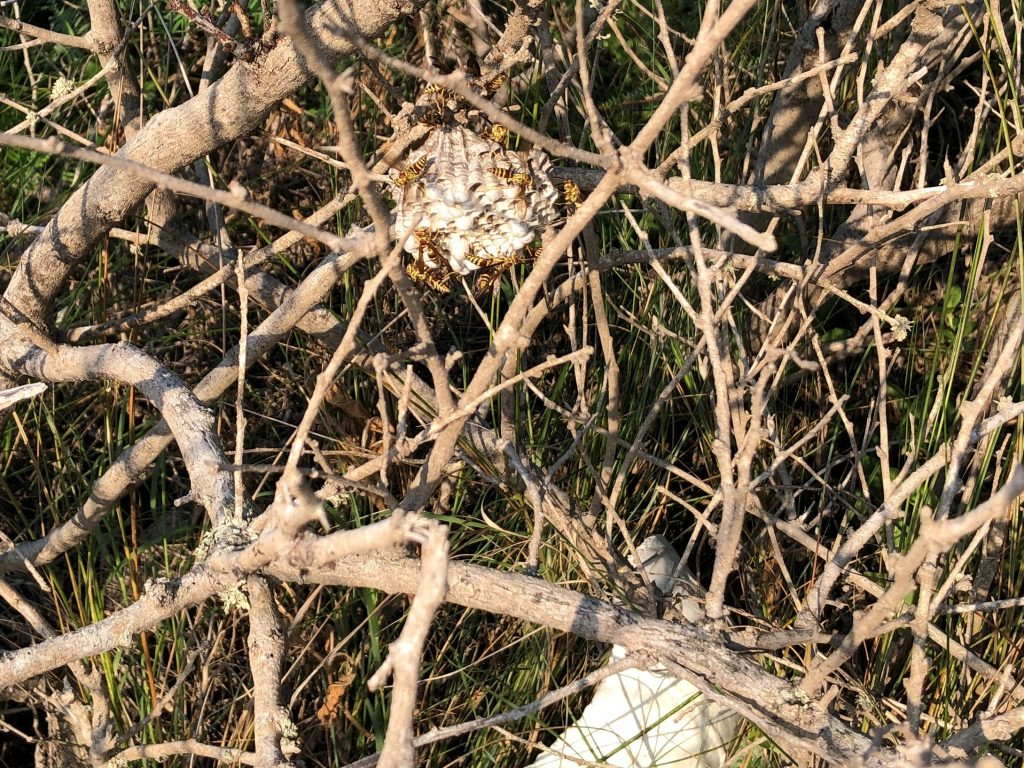 Wasp Nest Above Trash